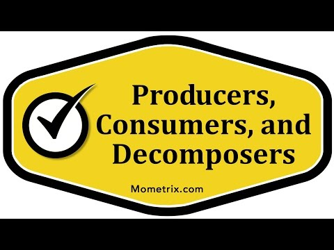 Producers, Consumers, and Decomposers