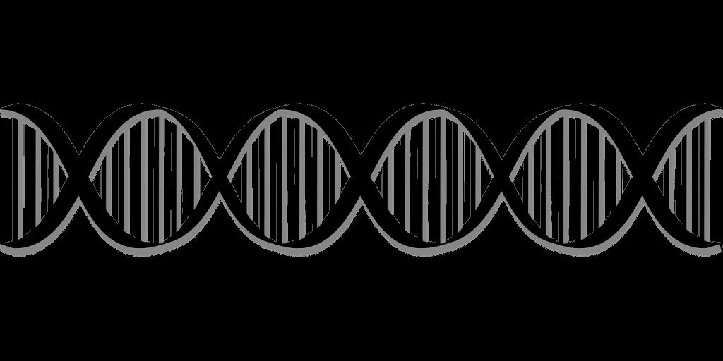 A DNA strand