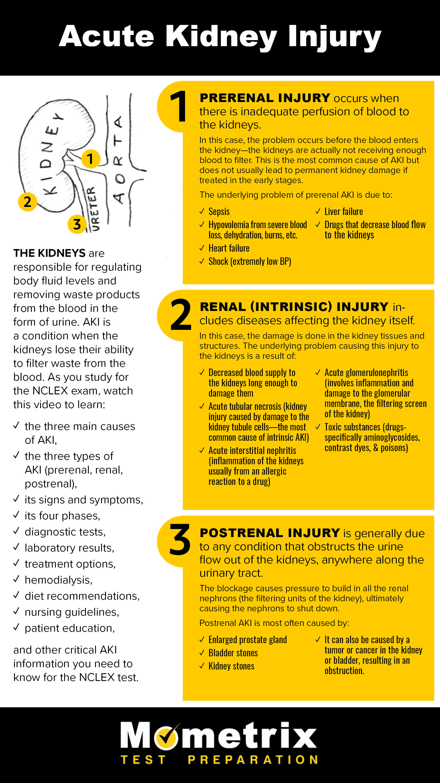 Infographic on Acute Kidney Injury
