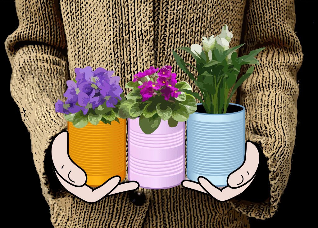 Image of three plants in cans