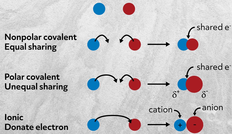 atom bonds
