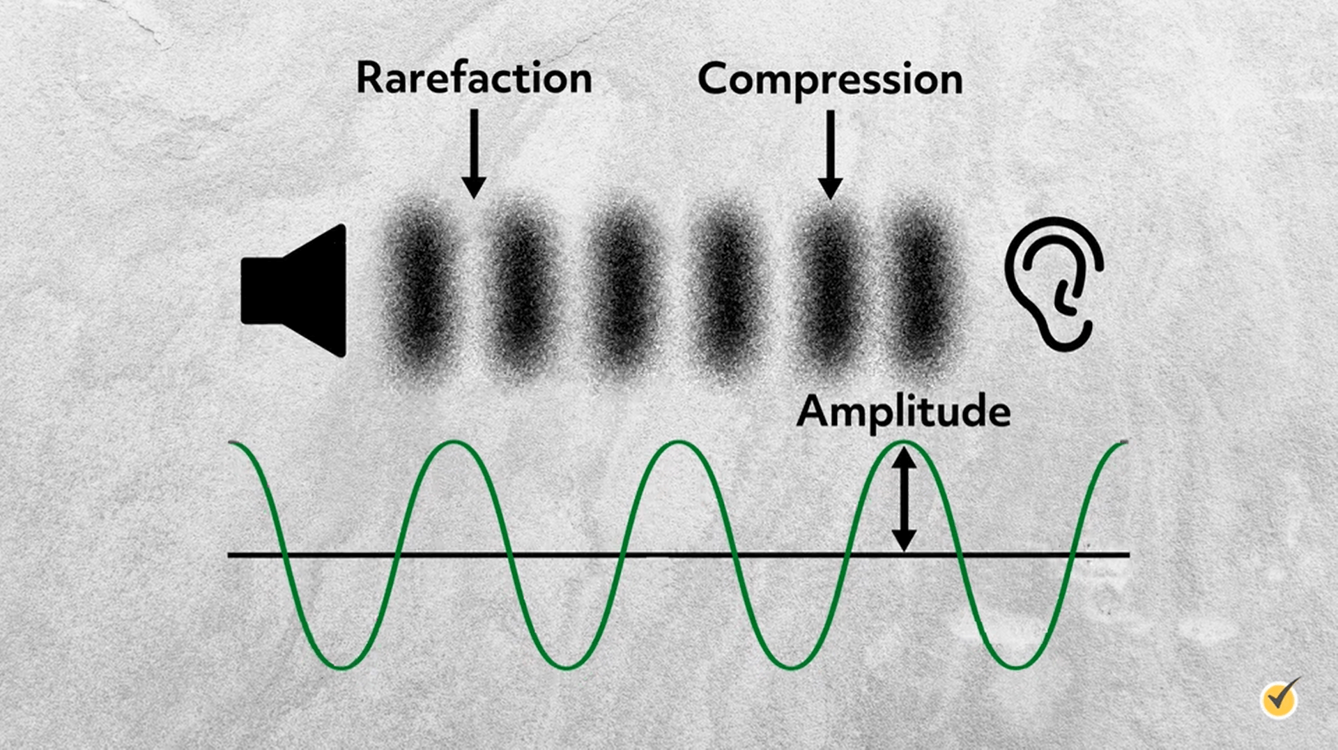 Refraction, compression, and amplitude.